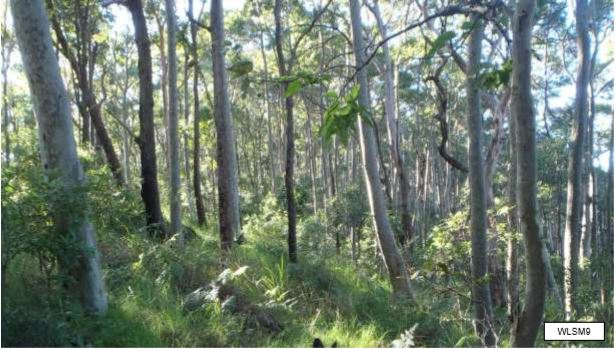 Hunter Valley Moist Forest Example